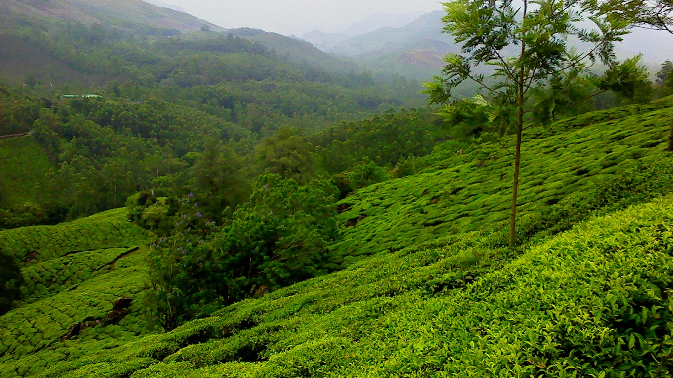 Munnar (Kerala) Outstation Cab Services